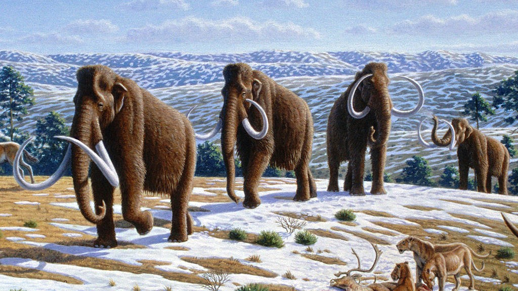 Humans Weren't the Only Cause of the Woolly Mammoth's Extinction