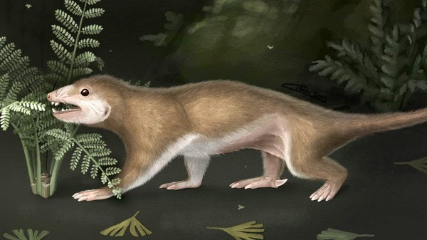 Did Early Mammals Really Evolve Night Vision to Avoid Hungry Dinosaurs?