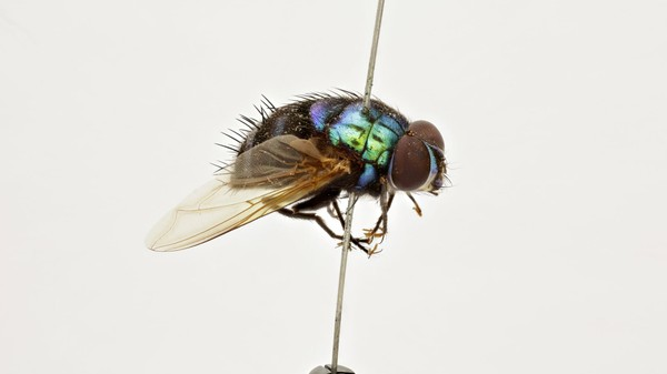 Bug Researchers Are Digitising Their Collections of Skewered Insects