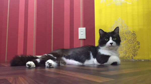 A New Japanese Cat Café Is Raising Awareness of Feline Immunodeficiency Virus