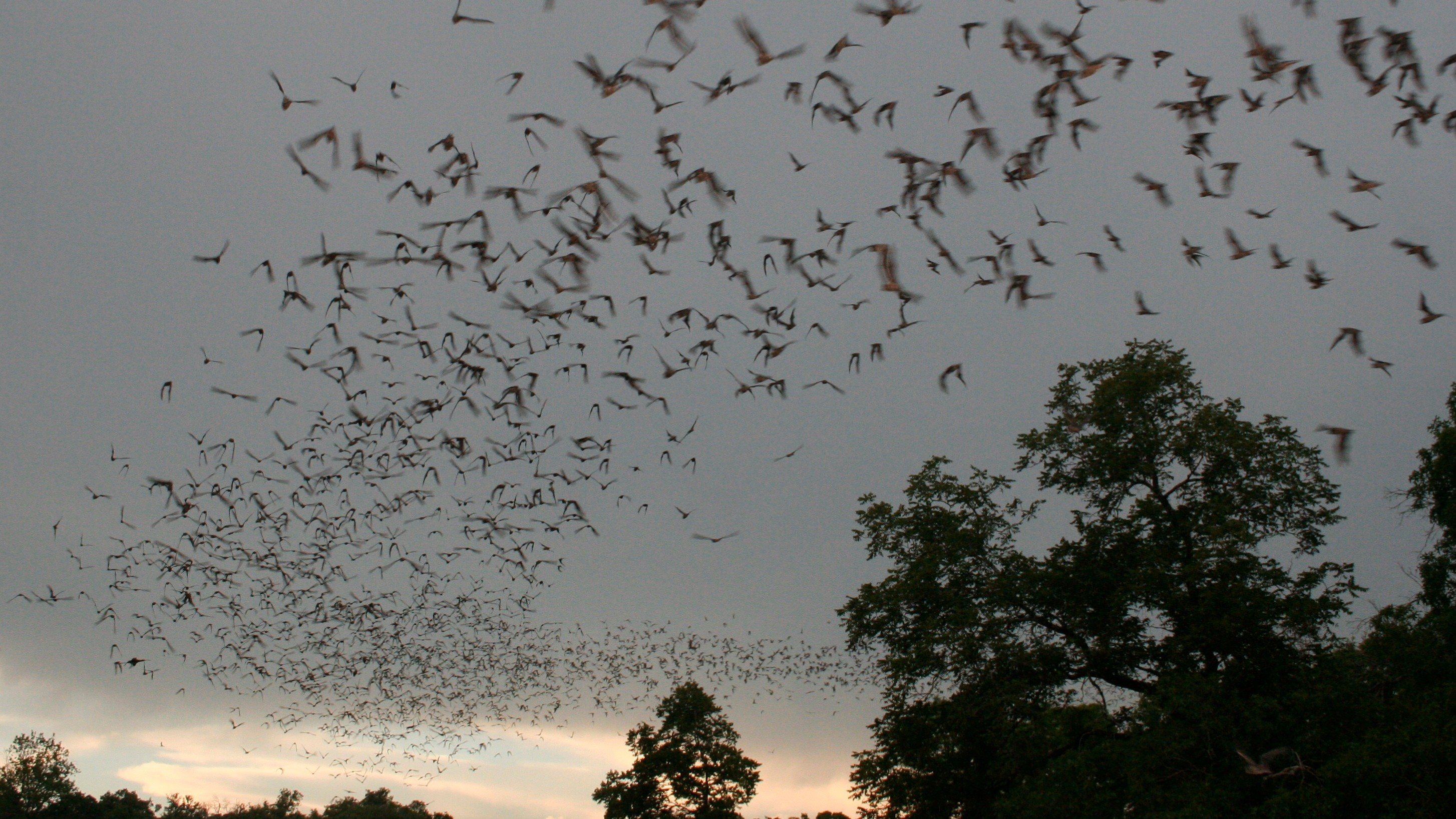 This Medicine-Misting Bat Cave 'Air Freshener' Could Ward Off a Deadly Disease