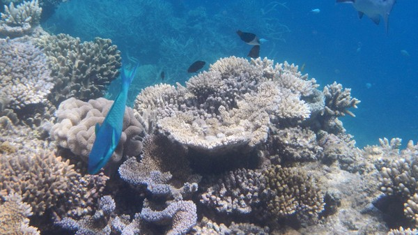 Saving the Great Barrier Reef Will Cost  $6 Billion, But It Could Be Worse