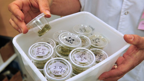 Is Big Pharma Out to Stop—Or Take Over—Marijuana Legalization?