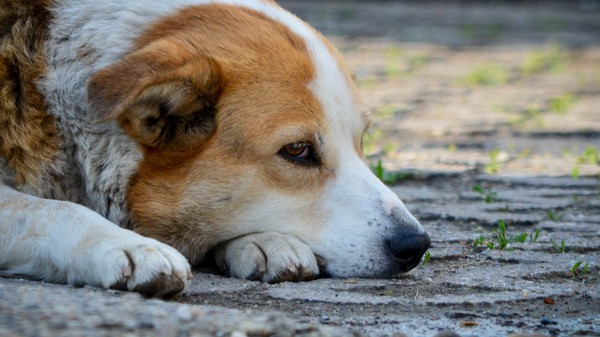 Dogs Know When You're Giving Them Half-Assed Praise, Study Says
