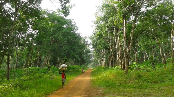 Liberia's Land Law Could Protect Forests, People and the Climate