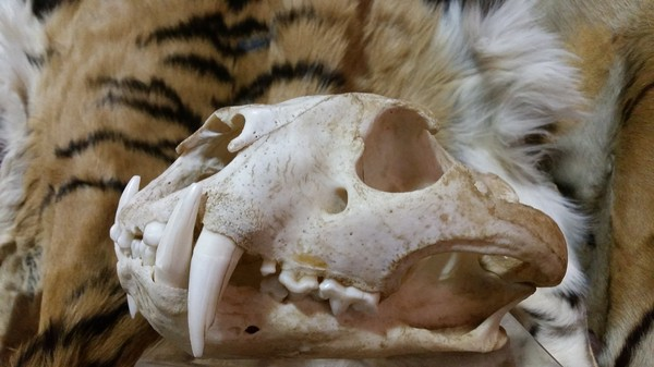Illegal Wildlife Traders Aren't Welcome on the Dark Web