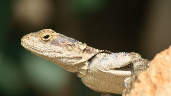 Feds Accuse Two 19-Year-Olds Of Hacking For Lizard Squad and PoodleCorp