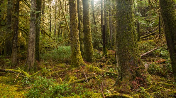 Prehistoric Trees Could 'Future-Proof' Forests Against Climate Change