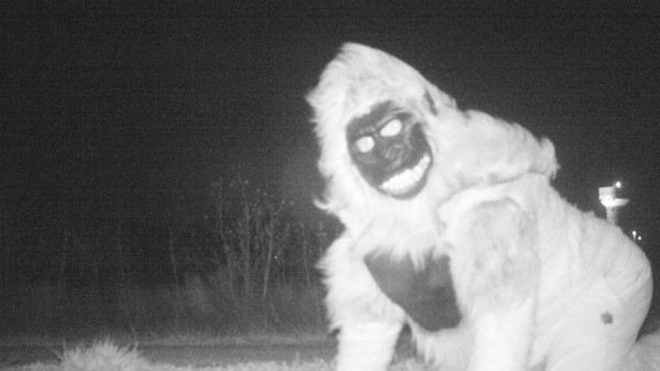 Kansas Couple Spent Three Nights Dressed as Gorillas for Police Wildlife Camera