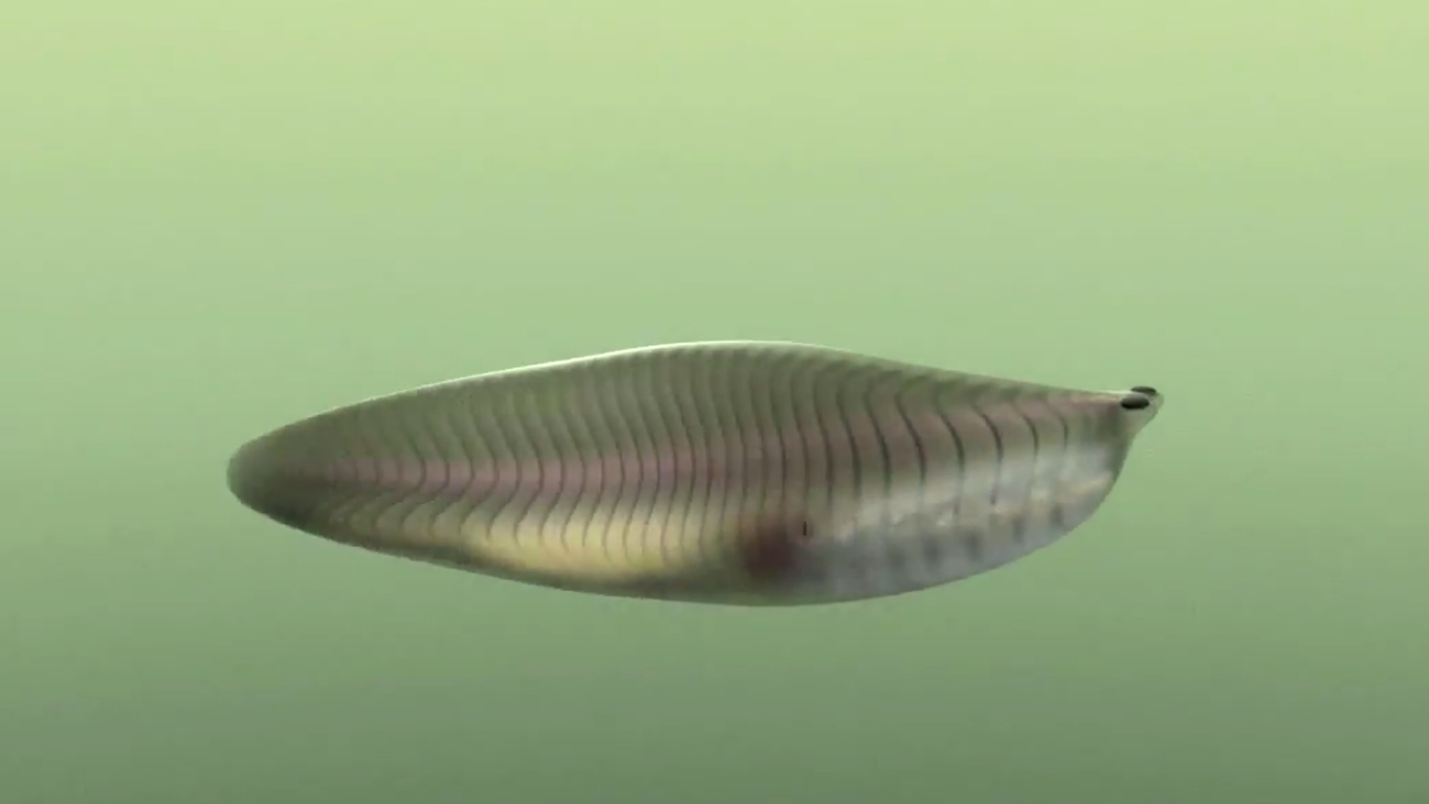 This Cambrian Bottom Feeder Kickstarted the Evolution of Jaws