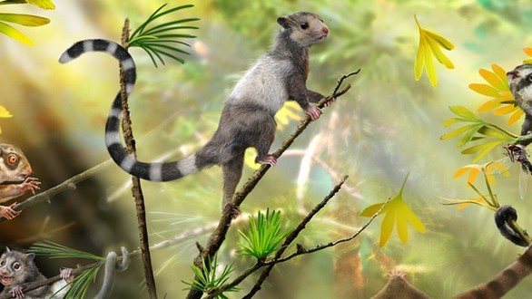 Adorable Squirrel-Like Creatures Shed Light on the Origin of Mammals