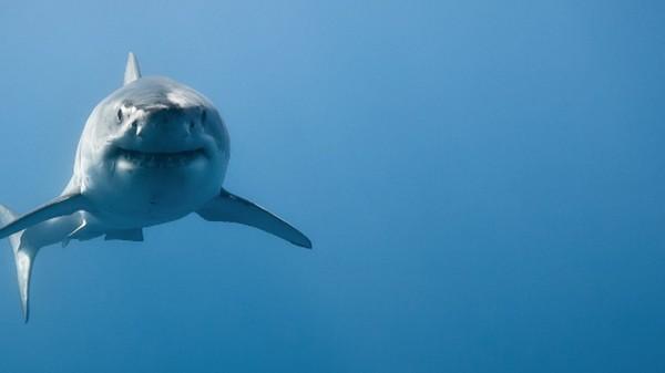 Haaien zijn 'per ongeluk' super goed in wiskunde