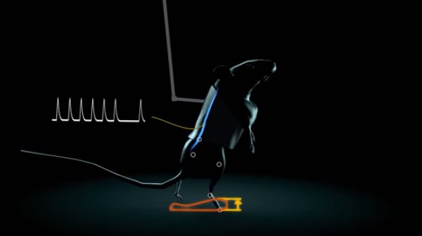 This Device Lets Fully Paralyzed Rats Walk Again, and Human Trials Are Planned