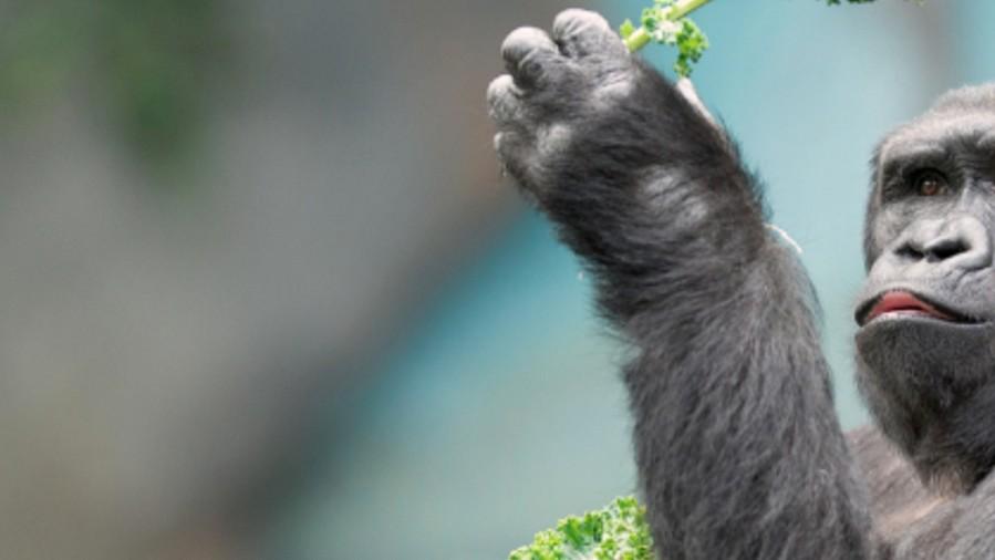 La Tierra tiene un 52 por ciento menos de animales salvajes que en 1970