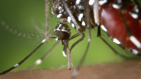 Invasive Mosquitoes Spread by Riding On America's Highways