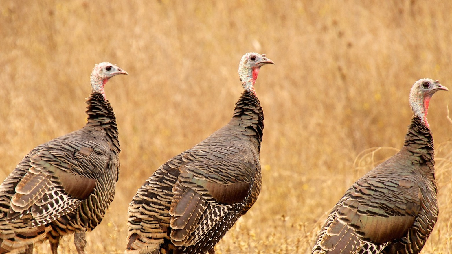 This Forgotten Turkey Bacteria Could Lead to the Super-Antibiotic of the Future