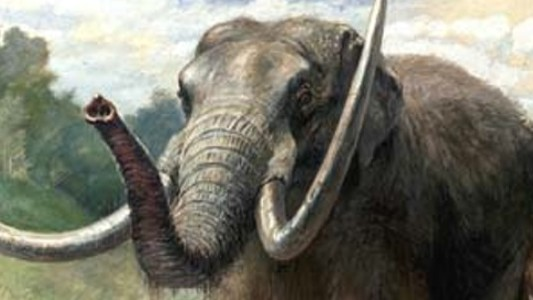 Humans Are Off the Hook for the Mastodon Extinction
