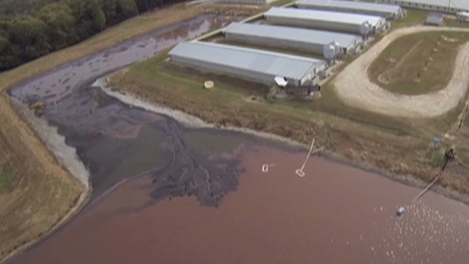 Drone Footage Reveals Massive, Toxic Manure 'Lagoons' at Factory Farms