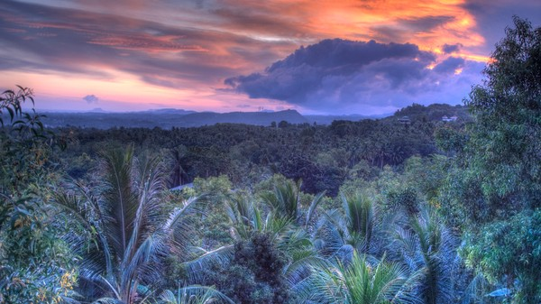 Tropical Forests Soak Up Much More Carbon than We Thought