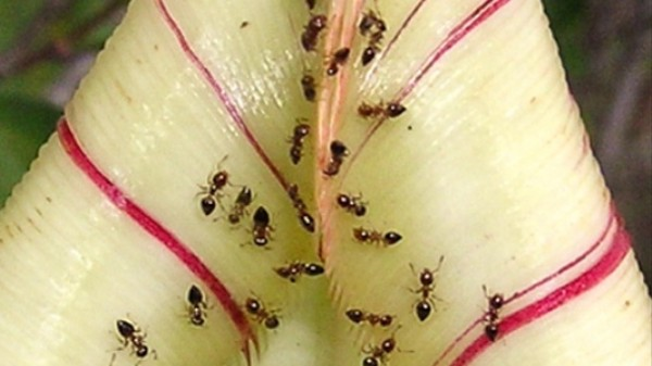 Carnivorous Plants Are More Conniving Than You Think