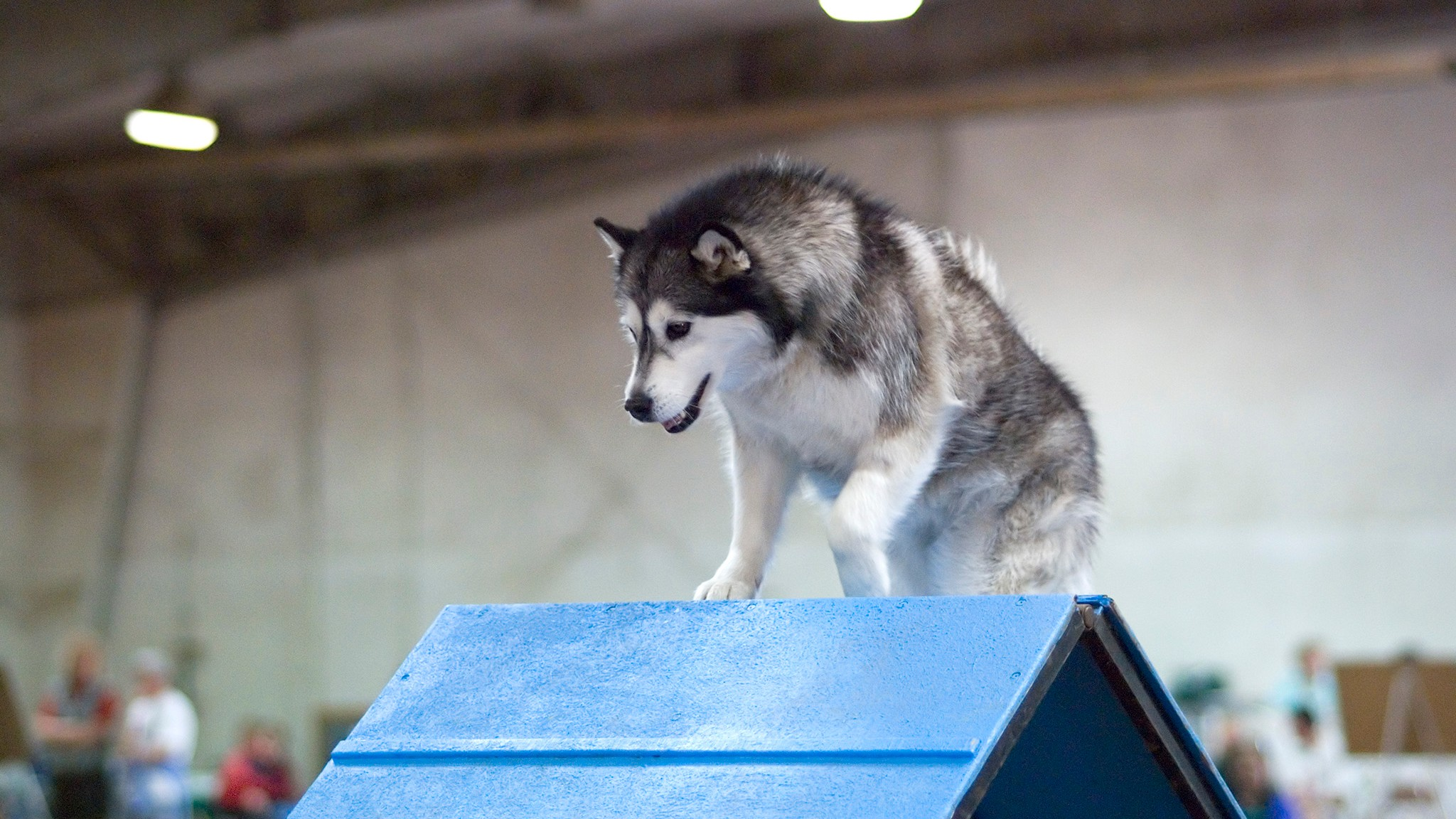 Is It Riskier to Be a Dog Athlete or a Human Athlete?