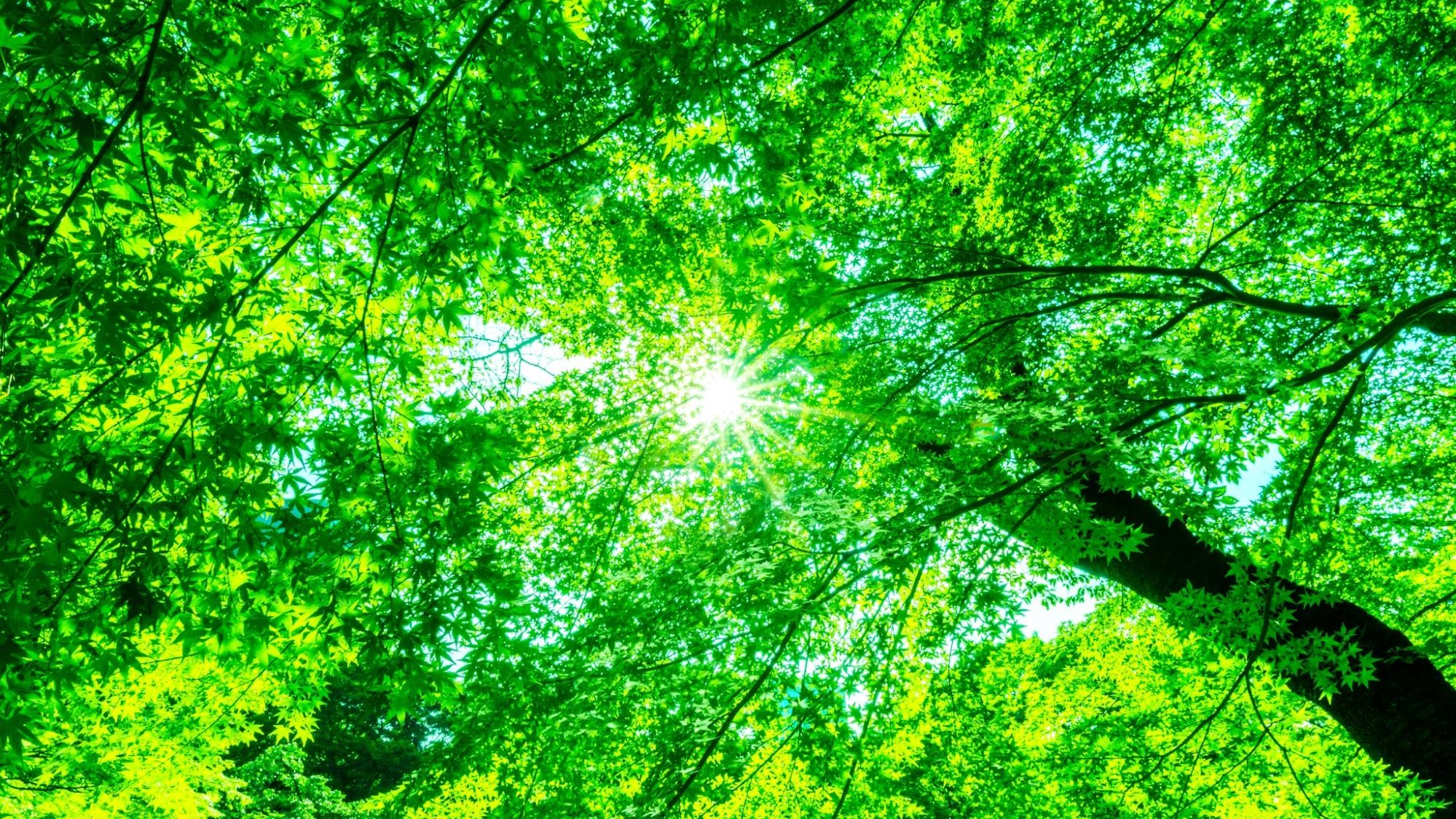 Eating the Sun: Can Humans Be Hacked to Do Photosynthesis?