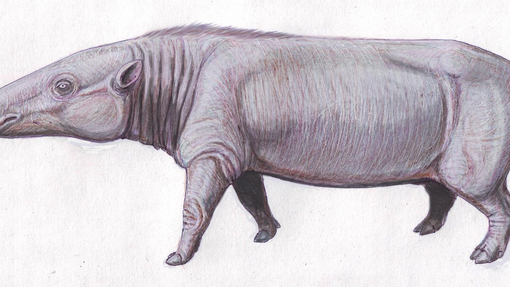 Fossils of an Elusive Hippo Ancestor Found in Africa
