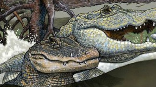 Scientists Are Mega-Stoked on Mother Lode of Croc Fossils Found in the Amazon