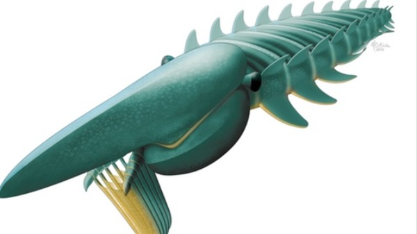 What Sea Monsters Looked Like Half a Billion Years Ago