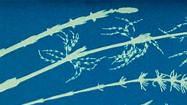 The Hauntingly Beautiful Photos of Anna Atkins, Creator of Botanical Photography