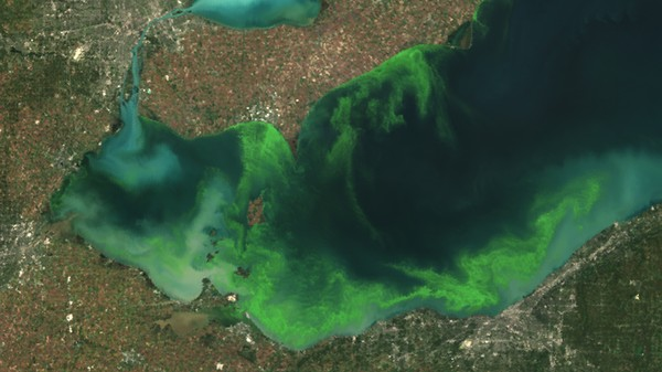 ​The Plan to Turn Toxic Algal Blooms into Energy