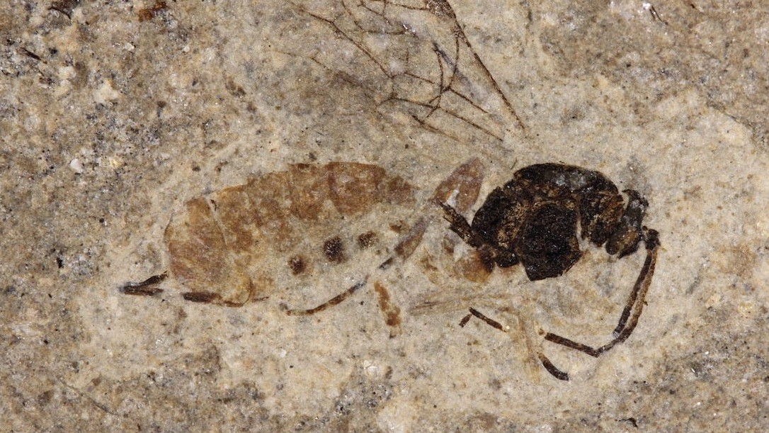 Darwin's Classic Monster: The Parasitoid Wasp