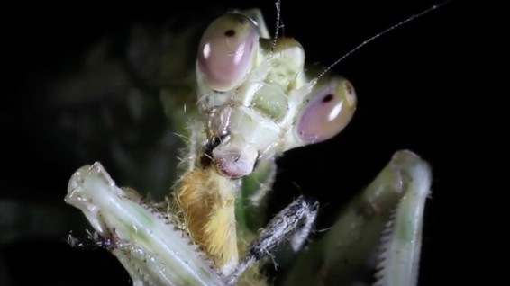Staring Into These Insects' Eyes Will Freak You Out