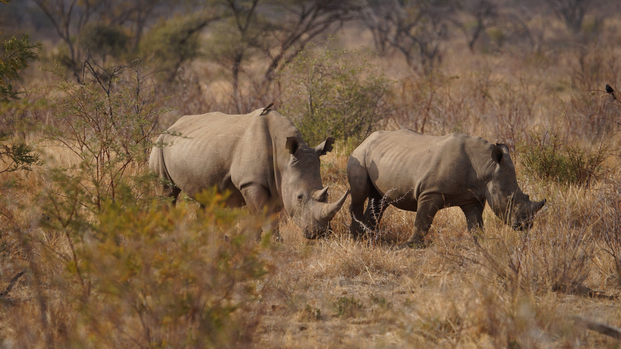 The Promise of Drones in South Africa's Poaching Crisis