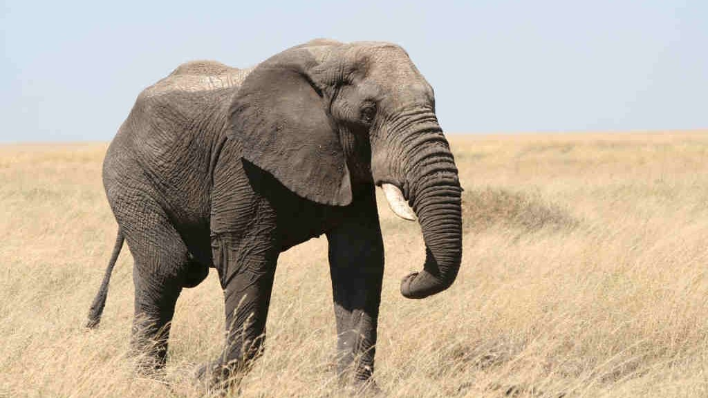 $1.5 Million Worth of Ivory Is Listed on Craigslist in the US