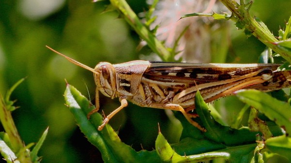Scientists Puffed Grass Smells into Locusts' Faces to See How Their Brains Work