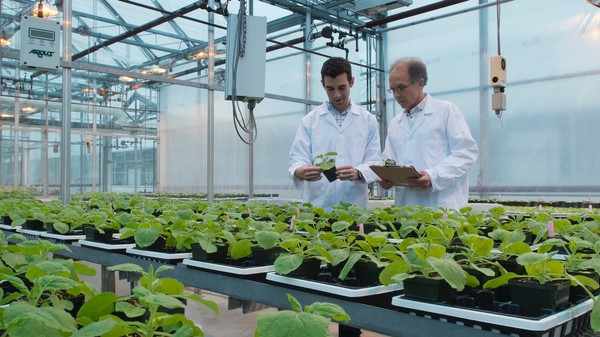 These Bioengineered Tobacco Plants are Growing Pharmaceuticals of the Future