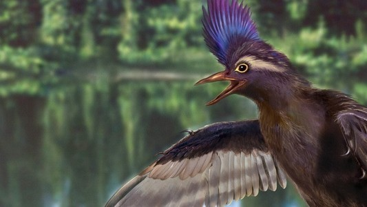 The Oldest Ancestor of Modern Birds Has Been Found in China