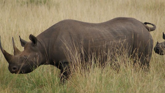 South Africa's Rhinos Are Nearing a Tipping Point to Extinction