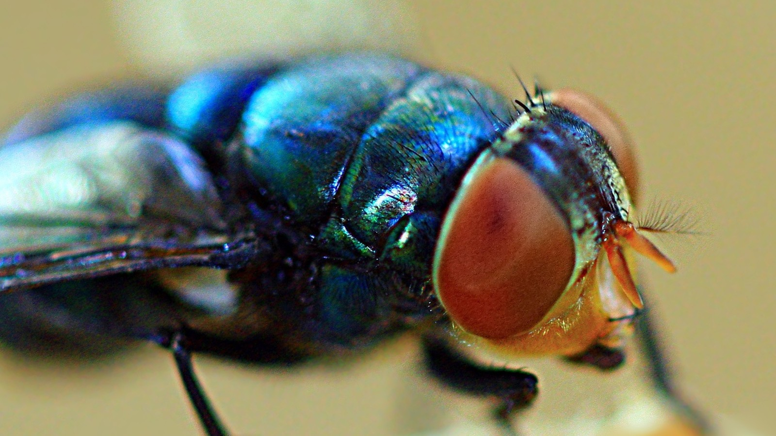 Did That Fruit Fly You Just Killed Feel Something Like Fear?