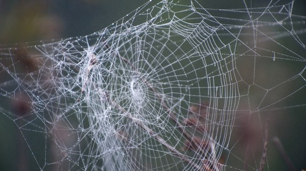 The Mechanical Engineering Future Is Caught Up in a 3D-Printed Spider Web