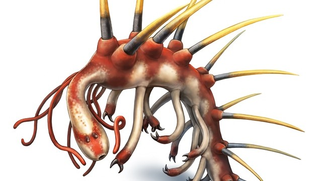 Massive Spikes, Neck Tentacles, and Two Mouths: Hallucigenia, Everybody