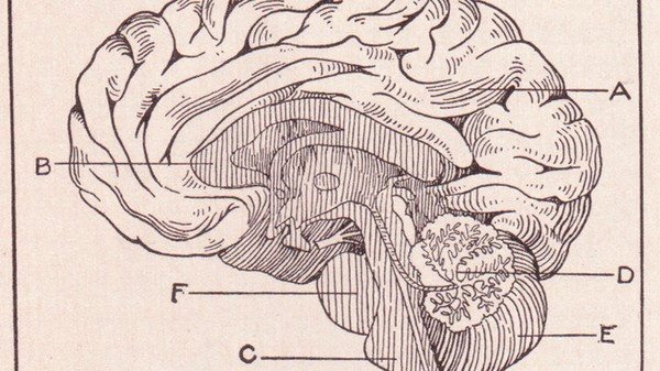 We've Been Wrong About Where the Brain Processes Language for 141 Years