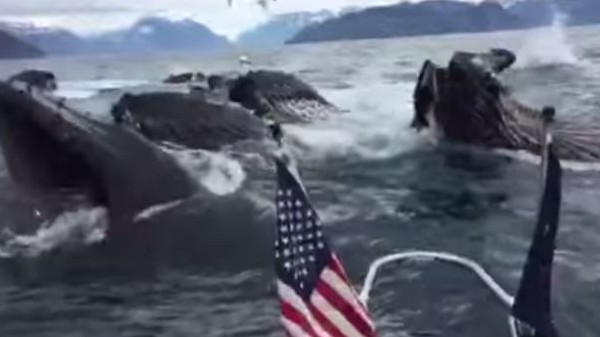These People Won the Whale-Watching Jackpot
