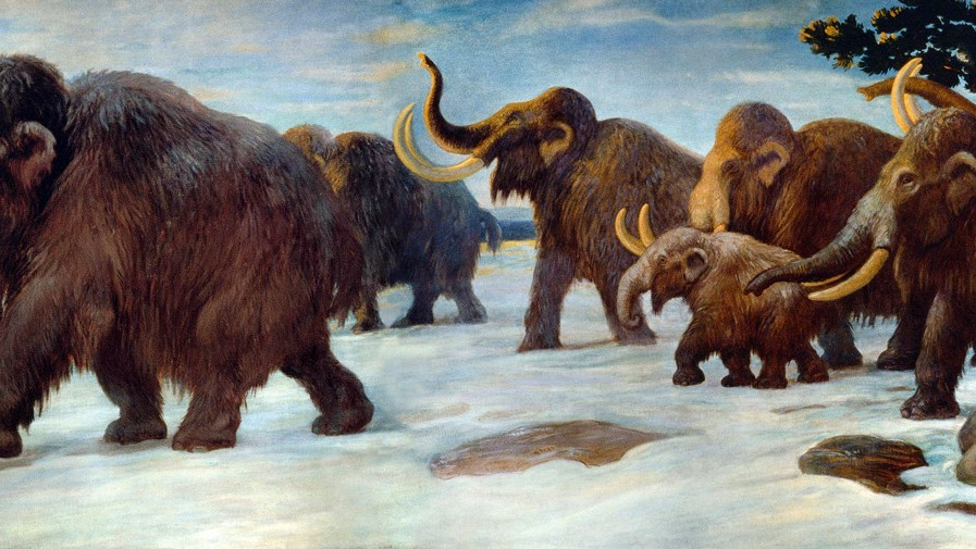 DNA Analysis Reveals the Role of Climate Change in Mammoth Extinction