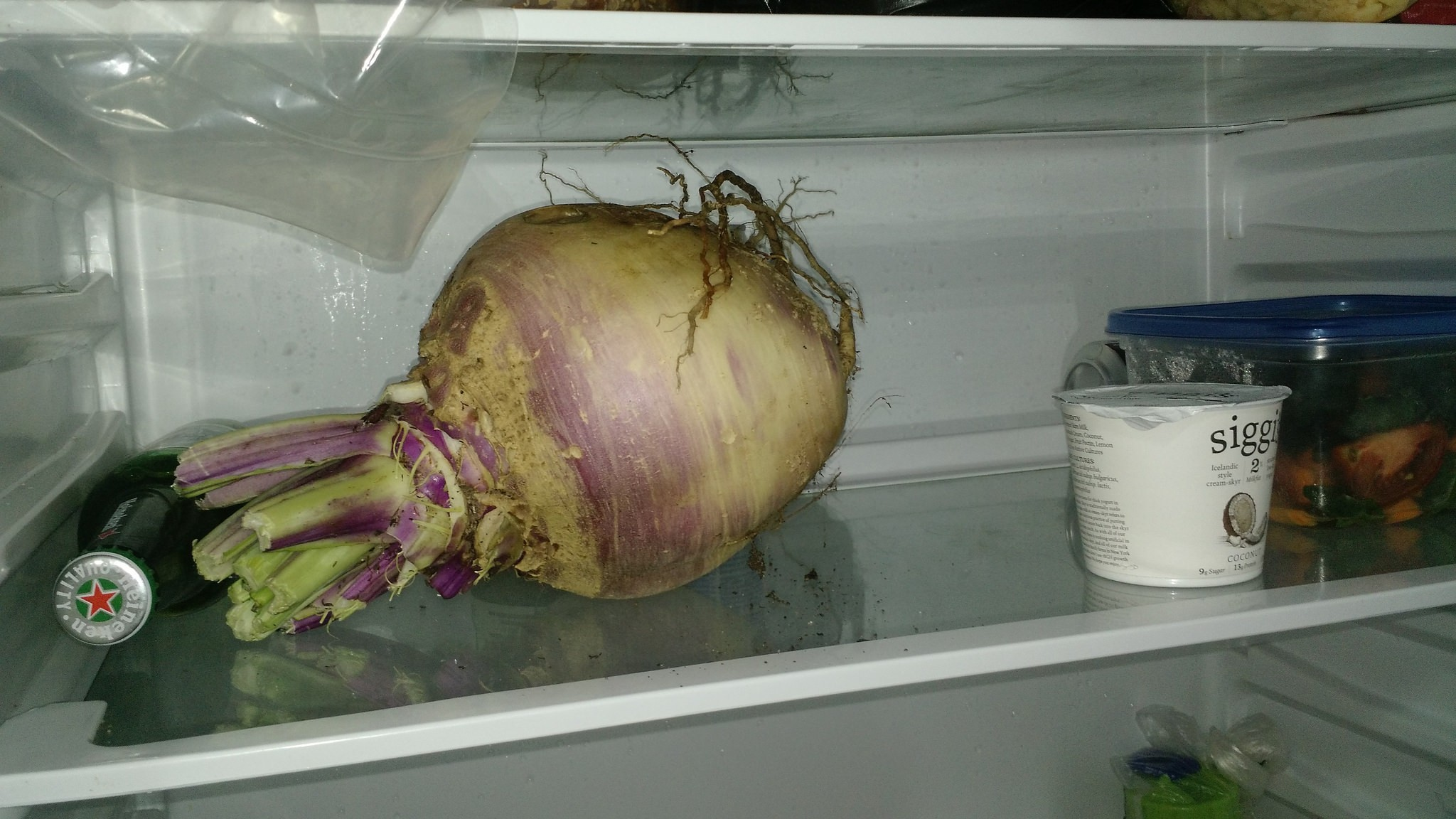 What Is This Enormous Vegetable and Why Is It in Our Refrigerator? (Update!)