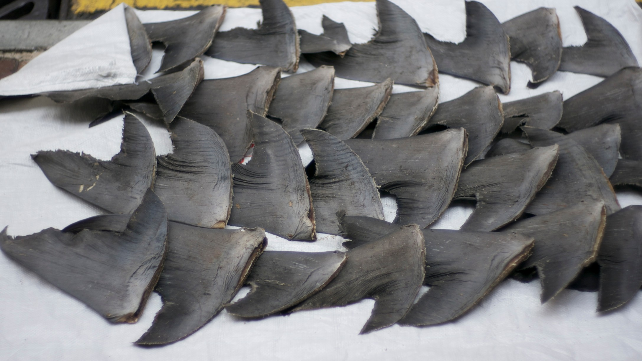 There Is One Company that Could Put a Big Dent in the Shark Fin Trade Overnight