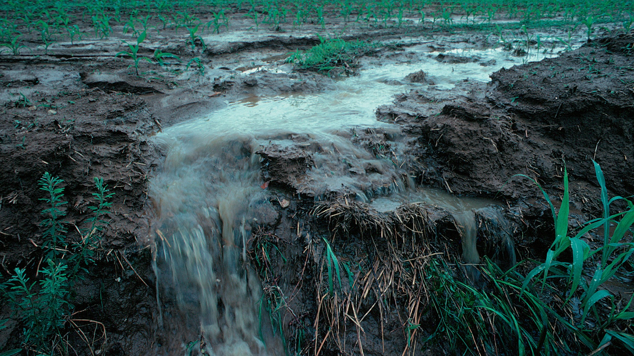 The Farm Runoff Feedback Loop Is Turning Aquifers Radioactive