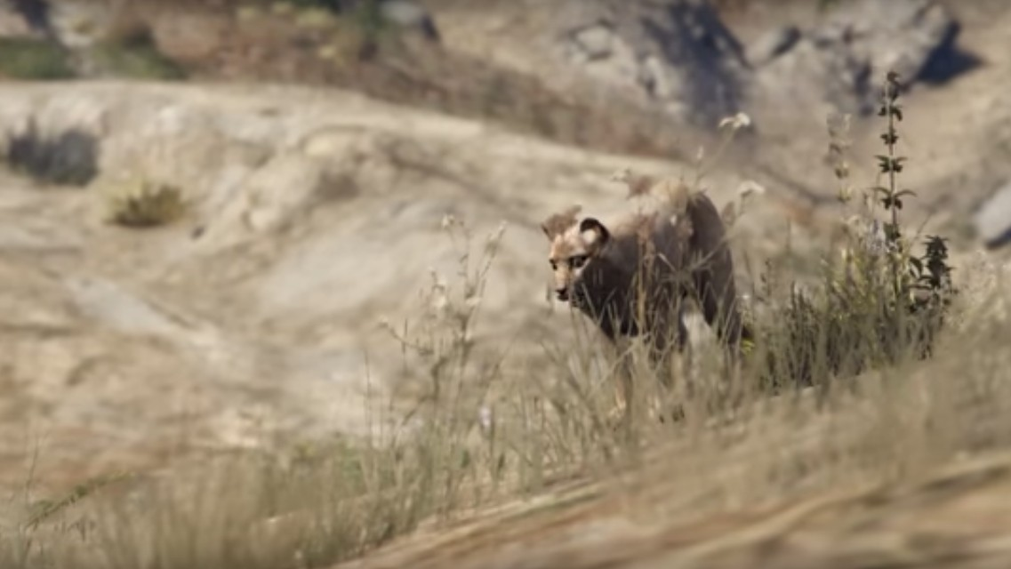 Watch GTA 5's Wildlife Documentary 'Onto the Land'