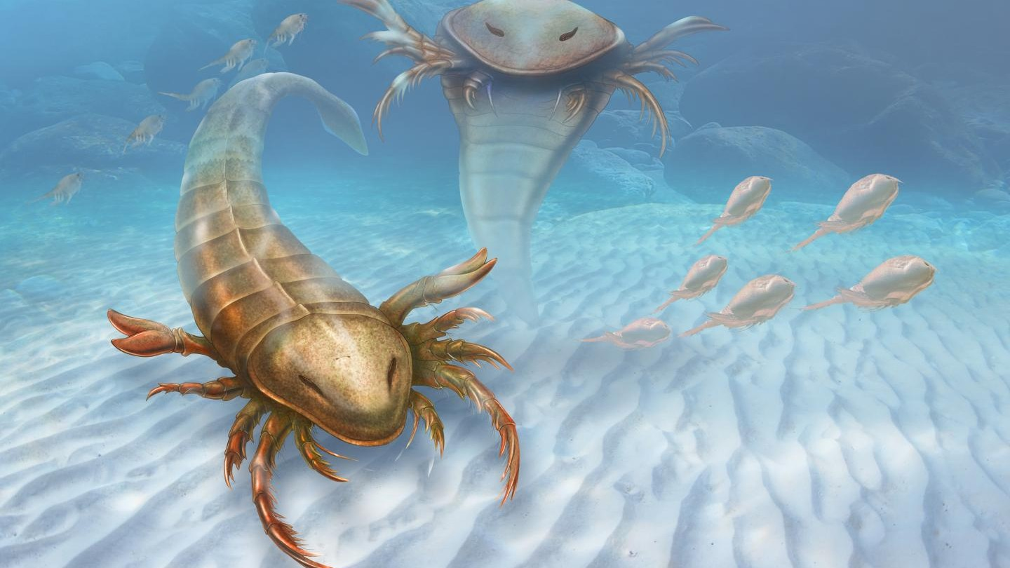 This Prehistoric Sea Scorpion Was the Size of a Person